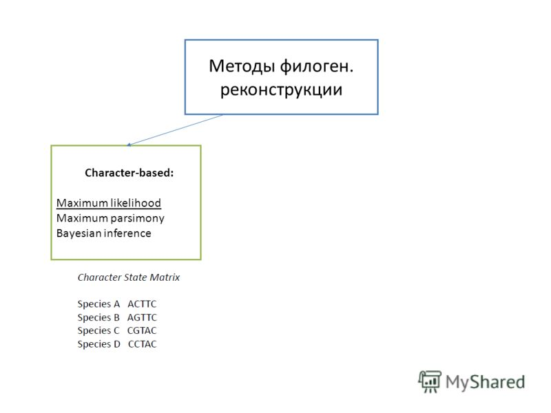 Методы филоген. реконструкции Character-based: Maximum likelihood Maximum parsimony Bayesian inference