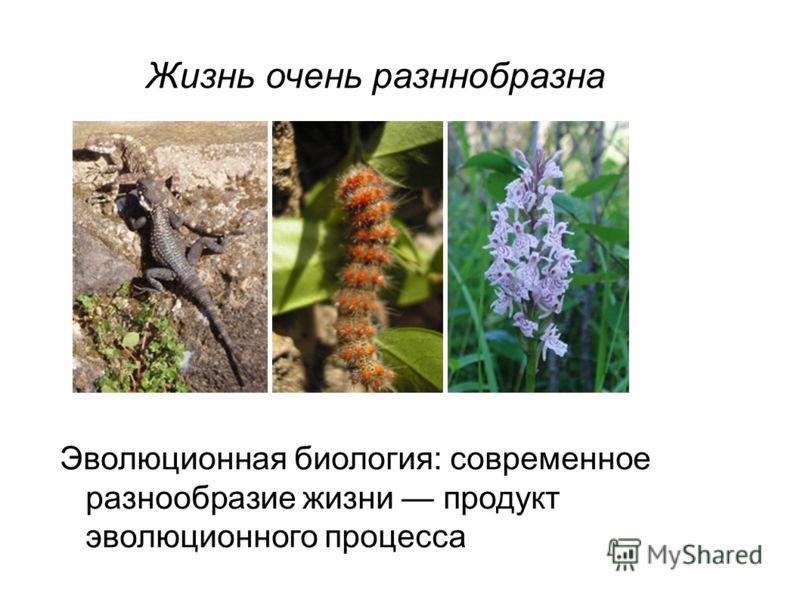 Жизнь очень разннобразна Эволюционная биология: современное разнообразие жизни продукт эволюционного процесса