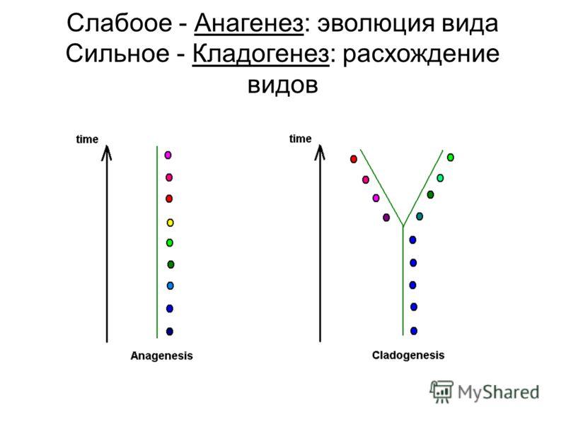 Слабоое - Анагенез: эволюция вида Сильное - Кладогенез: расхождение видов