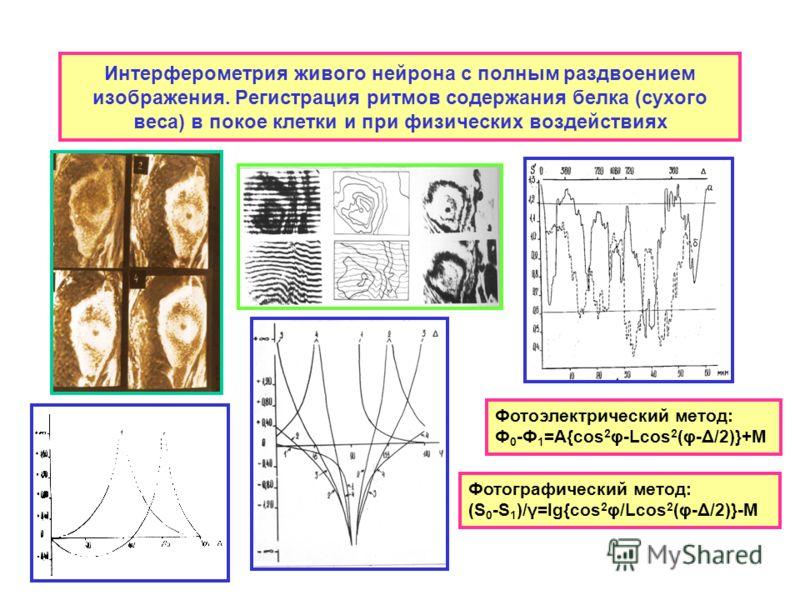 Интерферометрия живого нейрона с полным раздвоением изображения. Регистрация ритмов содержания белка (сухого веса) в покое клетки и при физических воздействиях Фотоэлектрический метод: Ф 0 -Ф 1 =А{cos 2 φ-Lcos 2 (φ-Δ/2)}+M Фотографический метод: (S 0