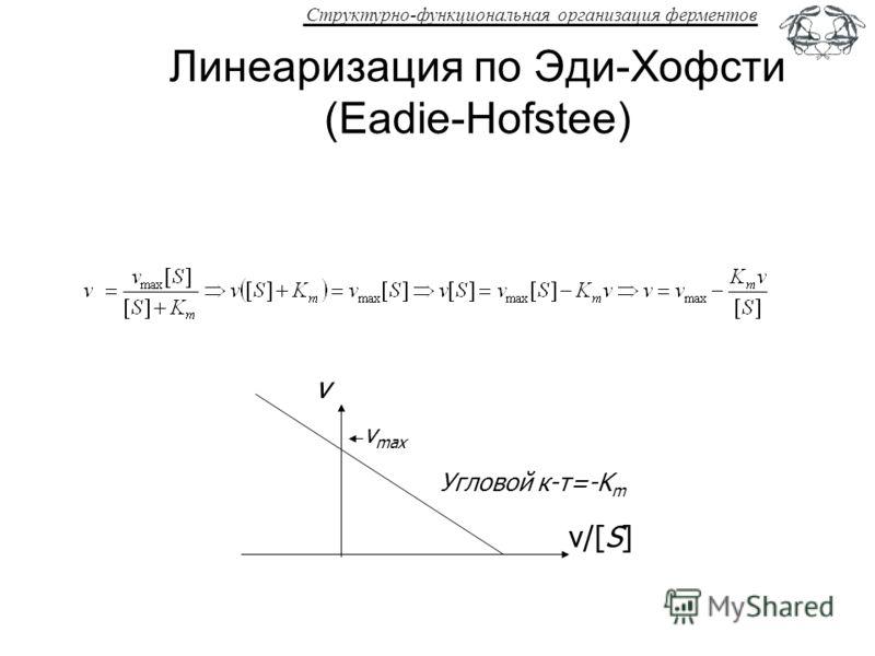 Структурно-функциональная организация ферментов Линеаризация по Эди-Хофсти (Eadie-Hofstee) v/[S] v Угловой к-т=-K m v max