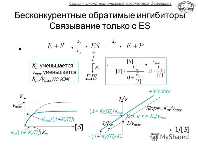 Структурно-функциональная организация ферментов Бесконкурентные обратимые ингибиторы Связывание только с ES k1k1 k -1 k2k2 K m уменьшается v max уменьшается K m /v max не изм +inhibitor KIKI 1/[S] 1/v 1/v max -1/K m Slope=K m /v max (1+ K I /[I])/V m