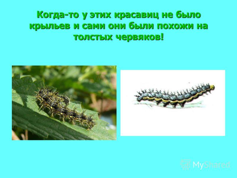 Когда-то у этих красавиц не было крыльев и сами они были похожи на толстых червяков!