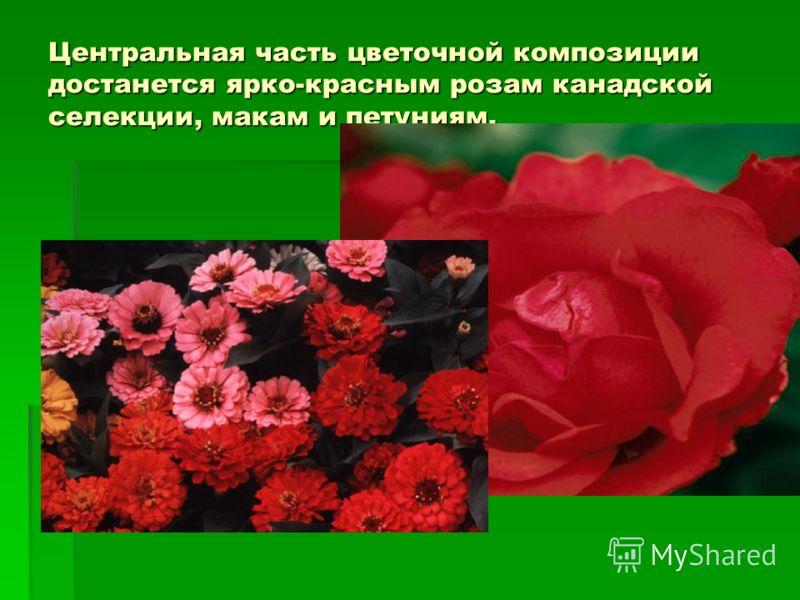 Центральная часть цветочной композиции достанется ярко-красным розам канадской селекции, макам и петуниям.