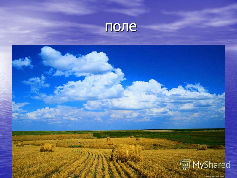 поле поле