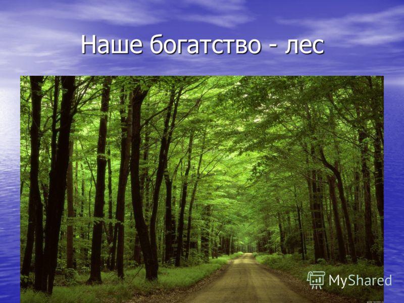 Наше богатство - лес