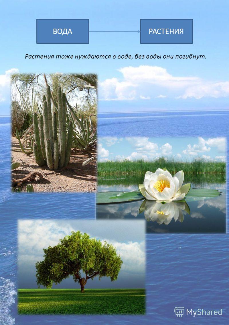 ВОДАРАСТЕНИЯ Растения тоже нуждаются в воде, без воды они погибнут.