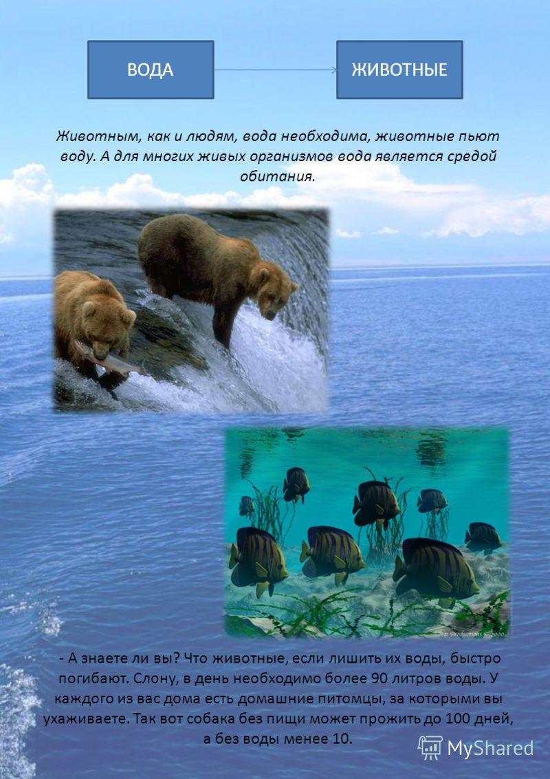 ВОДАЖИВОТНЫЕ Животным, как и людям, вода необходима, животные пьют воду. А для многих живых организмов вода является средой обитания. - А знаете ли вы? Что животные, если лишить их воды, быстро погибают. Слону, в день необходимо более 90 литров воды.