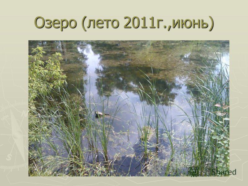 Озеро (лето 2011г.,июнь)