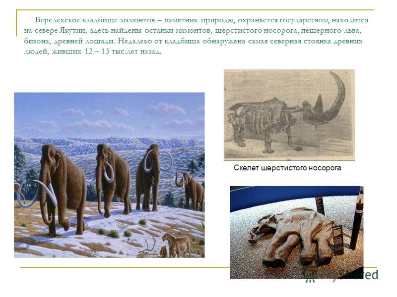 Берелехское кладбище мамонтов – памятник природы, охраняется государством, находится на севере Якутии, здесь найдены останки мамонтов, шерстистого носорога, пещерного льва, бизона, древней лошади. Недалеко от кладбища обнаружена самая северная стоянк