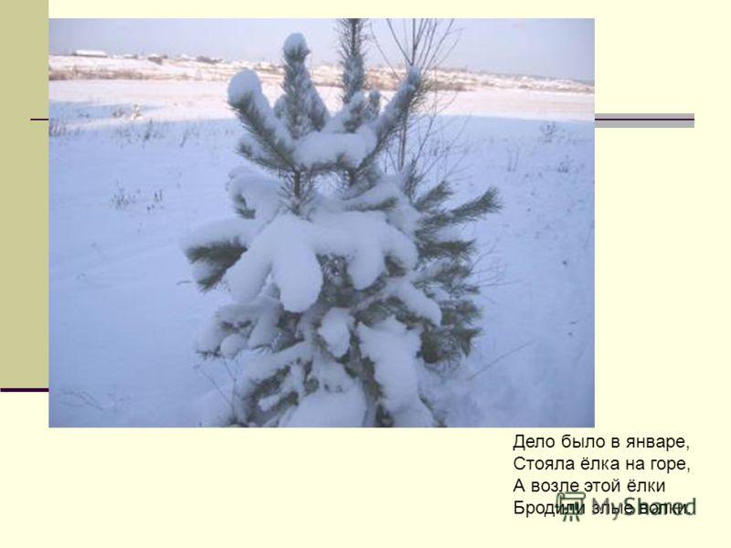 Дело было в январе, Стояла ёлка на горе, А возле этой ёлки Бродили злые волки.