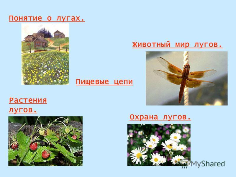 Понятие о лугах. Животный мир лугов. Растения лугов. Охрана лугов. Пищевые цепи