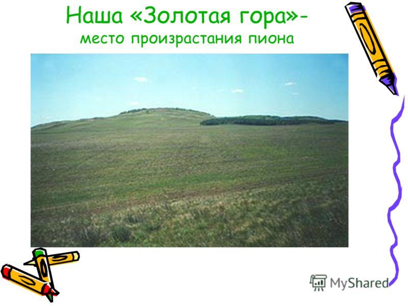 Наша «Золотая гора»- место произрастания пиона
