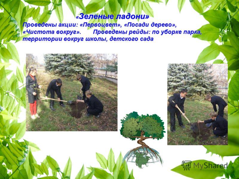 « Зеленые ладони» « Зеленые ладони» Проведены акции: «Первоцвет», «Посади дерево», «Чистота вокруг». Проведены рейды: по уборке парка, территории вокруг школы, детского сада
