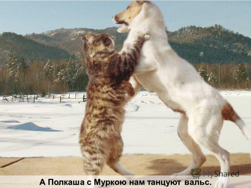 А Полкаша с Муркою нам танцуют вальс.