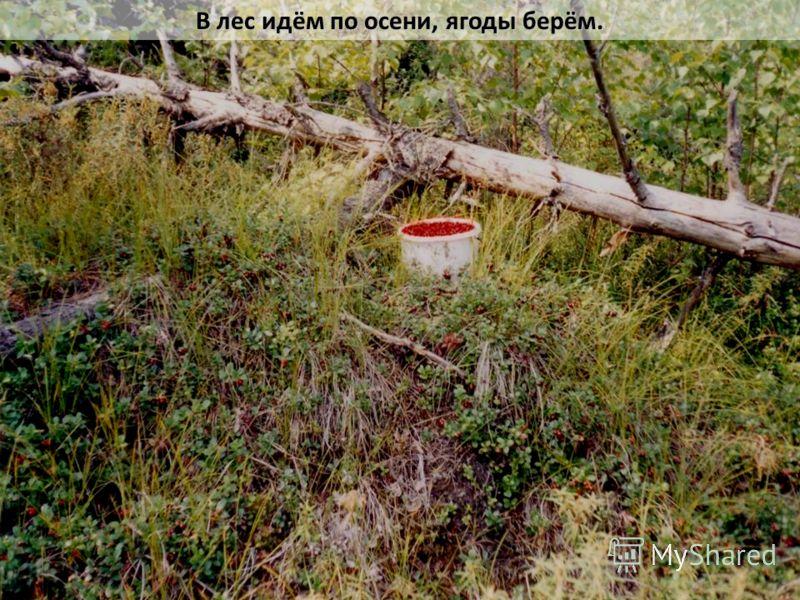 В лес идём по осени, ягоды берём.