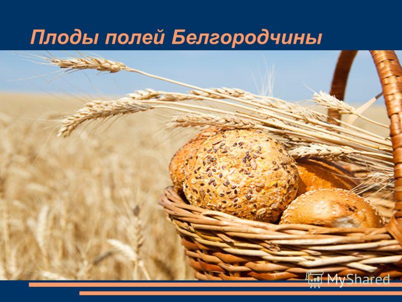 Плоды полей Белгородчины