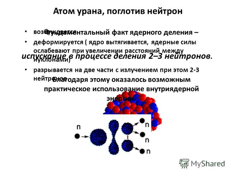 возбуждается деформируется ( ядро вытягивается, ядерные силы ослабевают при увеличении расстояний между нуклонами) разрывается на две части с излучением при этом 2-3 нейтронов Атом урана, поглотив нейтрон Фундаментальный факт ядерного деления – испус