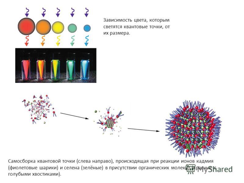 Зависимость цвета, которым светятся квантовые точки, от их размера. Самосборка квантовой точки (слева направо), происходящая при реакции ионов кадмия (фиолетовые шарики) и селена (зелёные) в присутствии органических молекул (красные с голубыми хвости