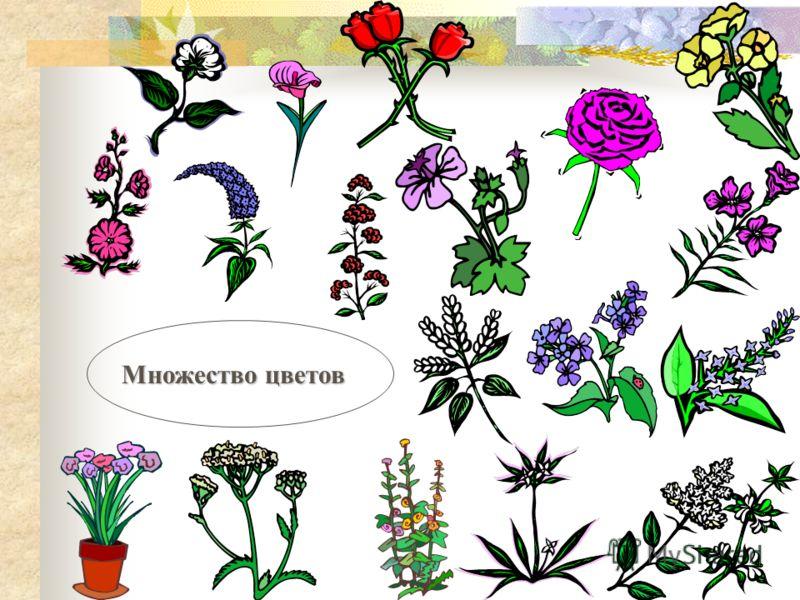 Множество цветов