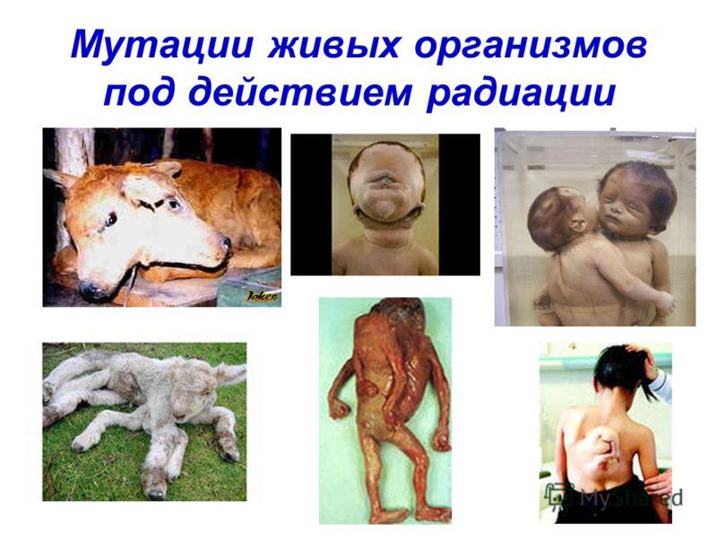 Мутации живых организмов под действием радиации