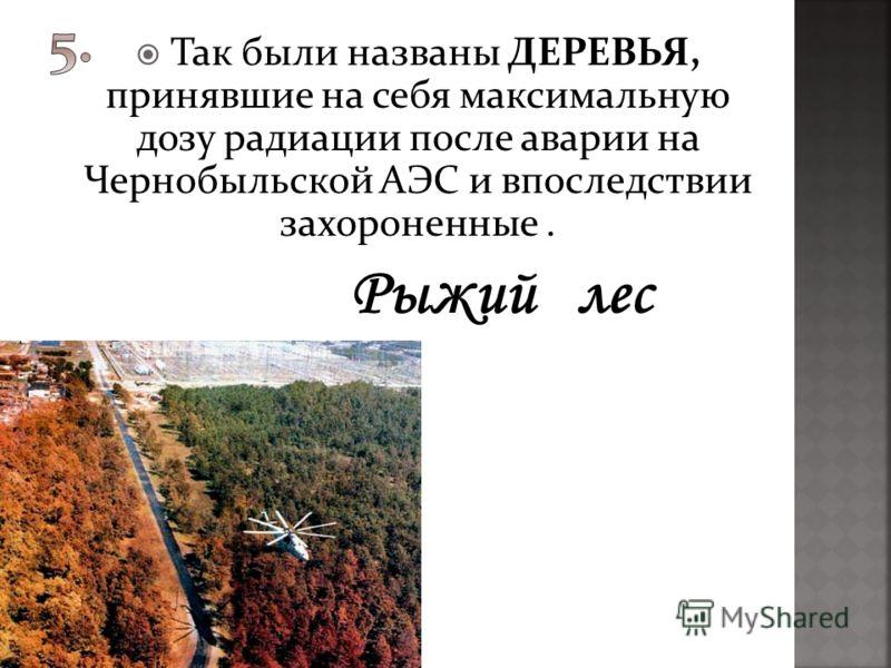 Так были названы ДЕРЕВЬЯ, принявшие на себя максимальную дозу радиации после аварии на Чернобыльской АЭС и впоследствии захороненные.