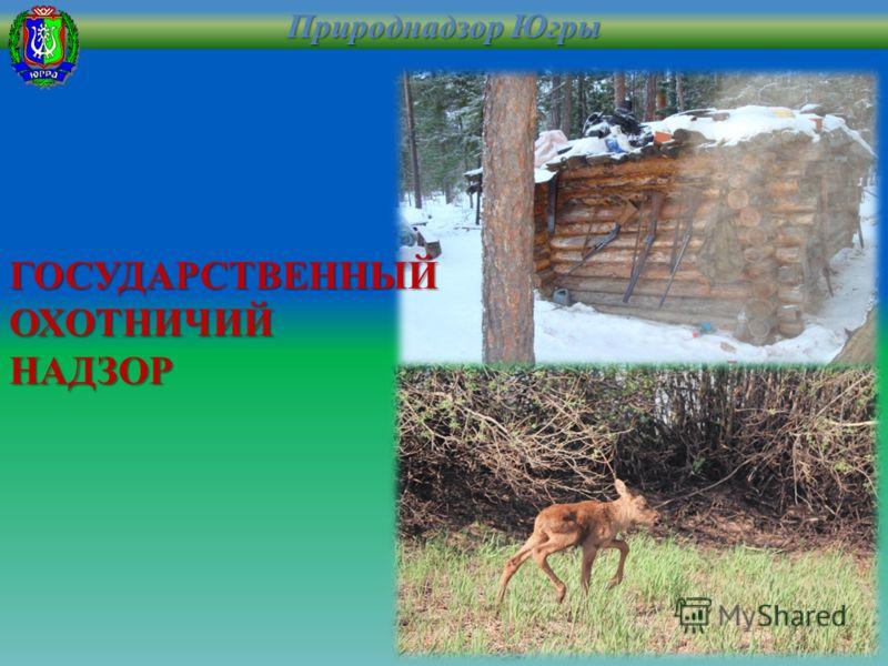 ГОСУДАРСТВЕННЫЙ ОХОТНИЧИЙ НАДЗОР Природнадзор Югры