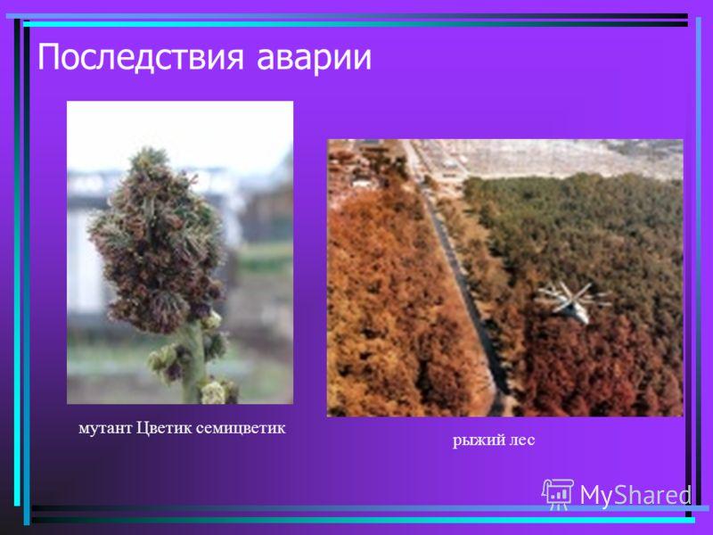 Последствия аварии мутант Цветик семицветик рыжий лес