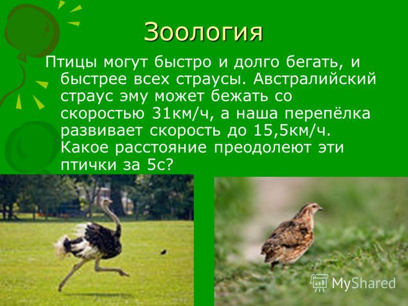 Зоология Птицы могут быстро и долго бегать, и быстрее всех страусы. Австралийский страус эму может бежать со скоростью 31км/ч, а наша перепёлка развивает скорость до 15,5км/ч. Какое расстояние преодолеют эти птички за 5с?