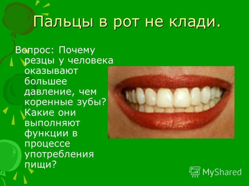Пальцы в рот не клади. Пальцы в рот не клади. Вопрос: Почему резцы у человека оказывают большее давление, чем коренные зубы? Какие они выполняют функции в процессе употребления пищи?