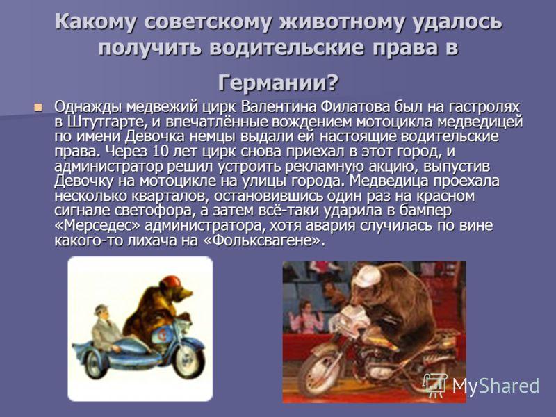 Какому советскому животному удалось получить водительские права в Германии? Однажды медвежий цирк Валентина Филатова был на гастролях в Штутгарте, и впечатлённые вождением мотоцикла медведицей по имени Девочка немцы выдали ей настоящие водительские п