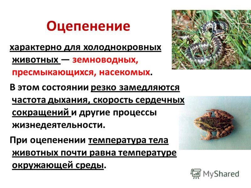 Оцепенение характерно для холоднокровных животных земноводных, пресмыкающихся, насекомых. В этом состоянии резко замедляются частота дыхания, скорость сердечных сокращений и другие процессы жизнедеятельности. При оцепенении температура тела животных