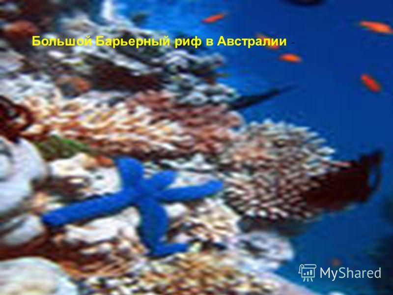 Большой Барьерный риф в Австралии -