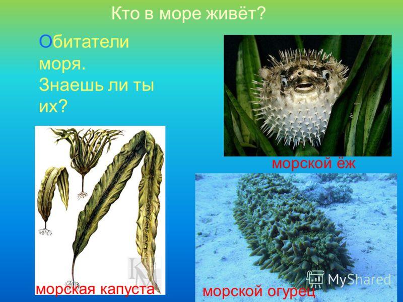 Кто в море живёт? Обитатели моря. Знаешь ли ты их? морская капуста морской ёж морской огурец