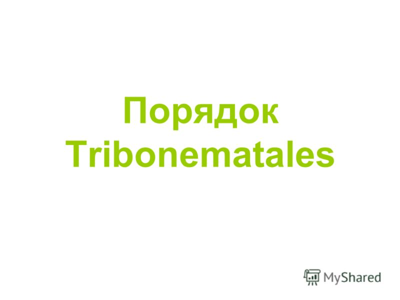 Порядок Tribonematales