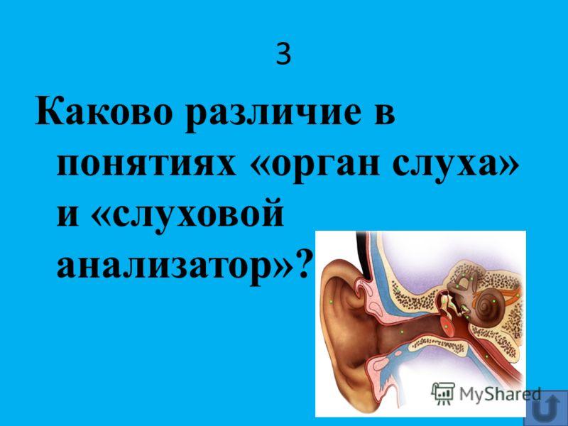 3 Каково различие в понятиях «орган слуха» и «слуховой анализатор»?