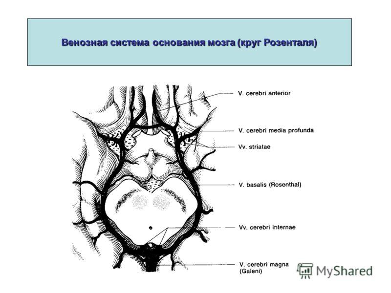 Венозная система основания мозга (круг Розенталя)