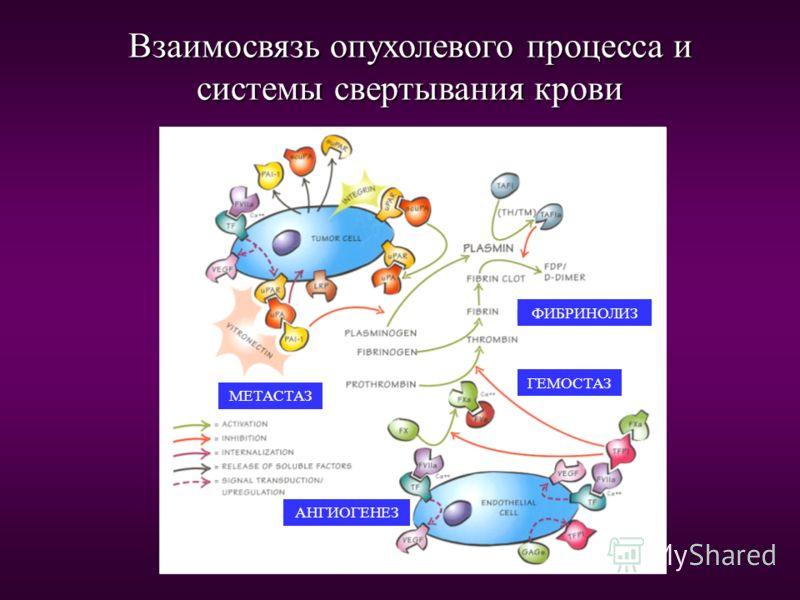 Эффекты гепарина на онкологический процесс в животной модели Ингибирование Ингибирование - Ангиогенеза - Ангиогенеза - Протеаз - Протеаз - Факторов роста - Факторов роста - Факторов коагуляции - Факторов коагуляции - Факторов подвижности - Факторов п