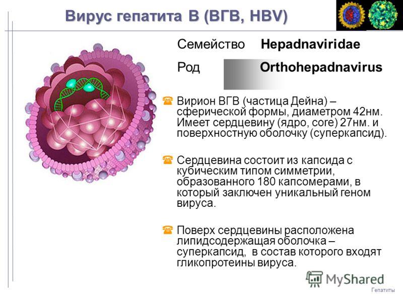 Гепатит в днк не обнаружена