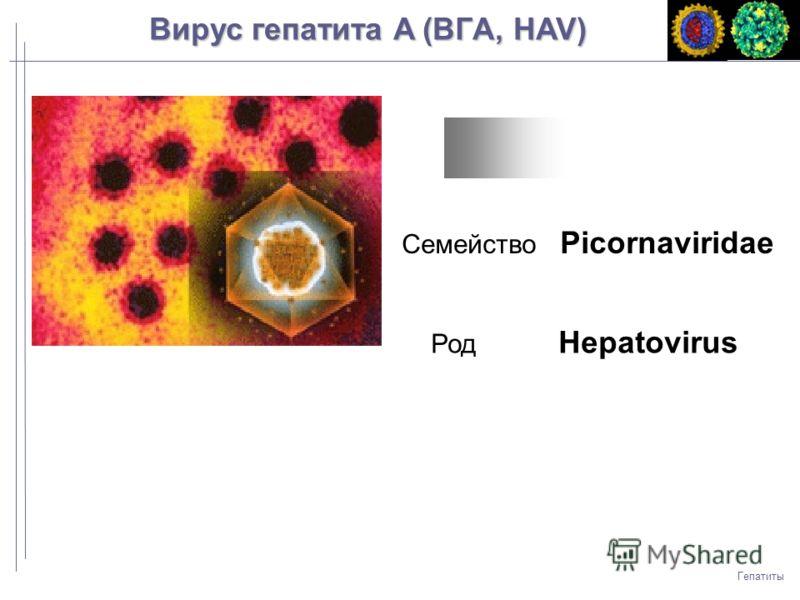 Гепатиты Вирус гепатита A (ВГA, HAV) Семейство Picornaviridae Род Hepatovirus