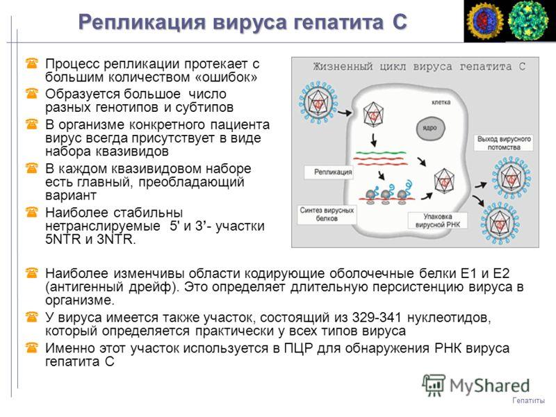 Гепатиты Процесс репликации протекает с большим количеством «ошибок» Образуется большое число разных генотипов и субтипов В организме конкретного пациента вирус всегда присутствует в виде набора квазивидов В каждом квазивидовом наборе есть главный, п