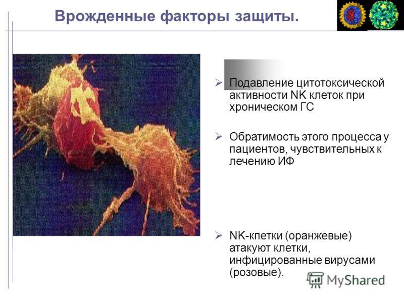 Врожденные факторы защиты. Подавление цитотоксической активности NK клеток при хроническом ГС Обратимость этого процесса у пациентов, чувствительных к лечению ИФ NK-кпетки (оранжевые) атакуют клетки, инфицированные вирусами (розовые).