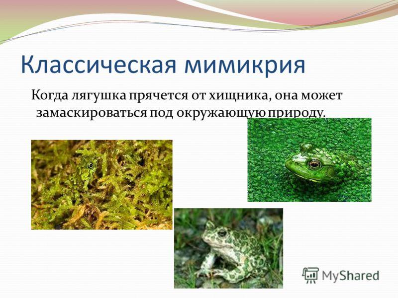 Классическая мимикрия Когда лягушка прячется от хищника, она может замаскироваться под окружающую природу.