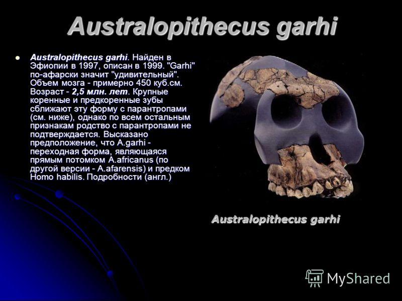 Australopithecus garhi Australopithecus garhi. Найден в Эфиопии в 1997, описан в 1999.