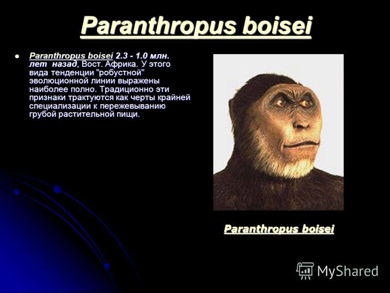 Paranthropus boisei Paranthropus boisei Paranthropus boisei 2.3 - 1.0 млн. лет назад, Вост. Африка. У этого вида тенденции