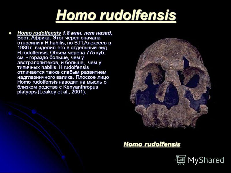 Homo rudolfensis Homo rudolfensis Homo rudolfensis 1.8 млн. лет назад, Вост. Африка. Этот череп сначала относили к H.habilis, но В.П.Алексеев в 1986 г. выделил его в отдельный вид H.rudolfensis. Объем черепа 775 куб. см. - гораздо больше, чем у австр