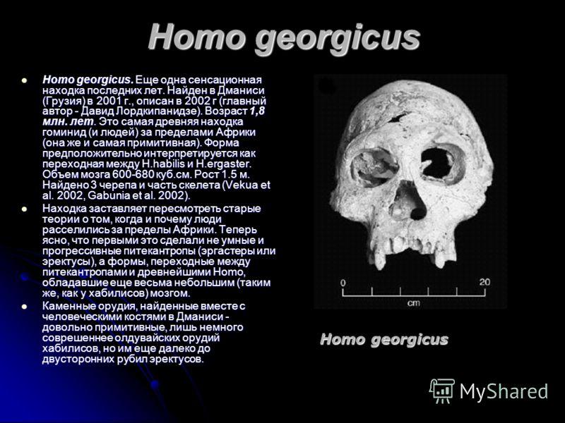 Homo georgicus Homo georgicus. Еще одна сенсационная находка последних лет. Найден в Дманиси (Грузия) в 2001 г., описан в 2002 г (главный автор - Давид Лордкипанидзе). Возраст 1,8 млн. лет. Это самая древняя находка гоминид (и людей) за пределами Афр