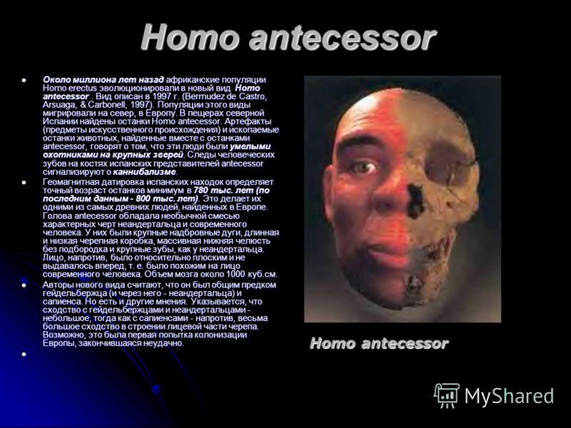Homo antecessor Около миллиона лет назад африканские популяции Homo erectus эволюционировали в новый вид Homo antecessor. Вид описан в 1997 г. (Bermudez de Castro, Arsuaga, & Carbonell, 1997). Популяции этого виды мигрировали на север, в Европу. В пе