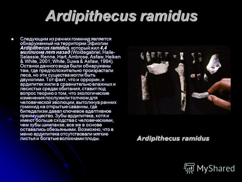 Ardipithecus ramidus Следующим из ранних гоминид является обнаруженный на территории Эфиопии Ardipithecus ramidus, который жил 4,4 миллиона лет назад (Woldegabriel, Haile- Selassie, Renne, Hart, Ambrose, Asfaw, Heiken & White, 2001; White, Suwa & Asf