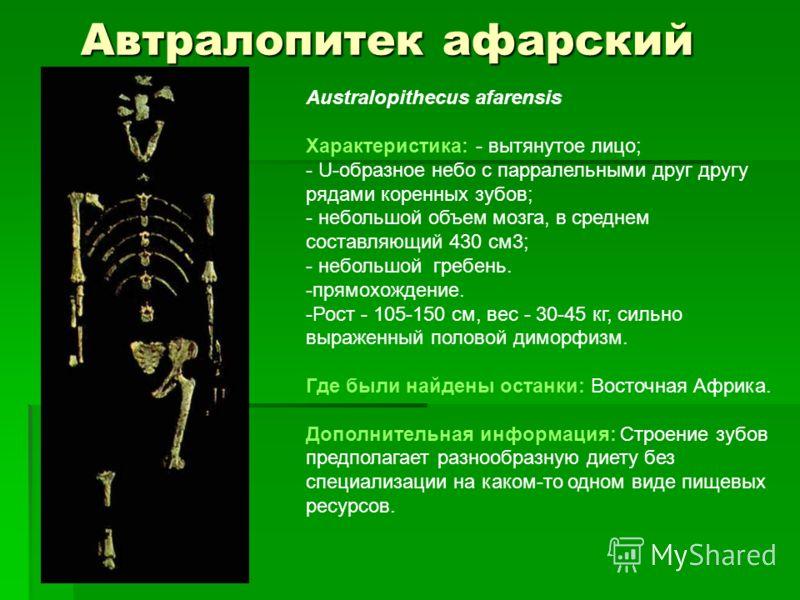 Автралопитек афарский Australopithecus afarensis Характеристика: - вытянутое лицо; - U-образное небо с парралельными друг другу рядами коренных зубов; - небольшой объем мозга, в среднем составляющий 430 см3; - небольшой гребень. -прямохождение. -Рост